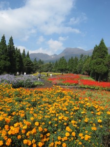 久住花公園の秋