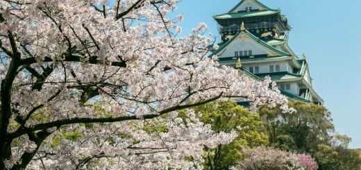 Sakura Osaka castle